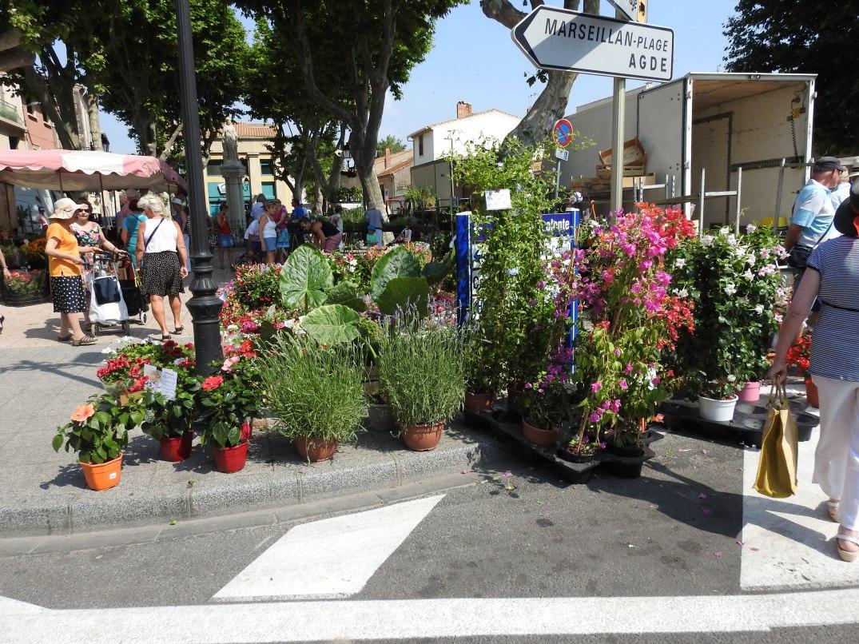 Blommor på marknaden i Marseillan